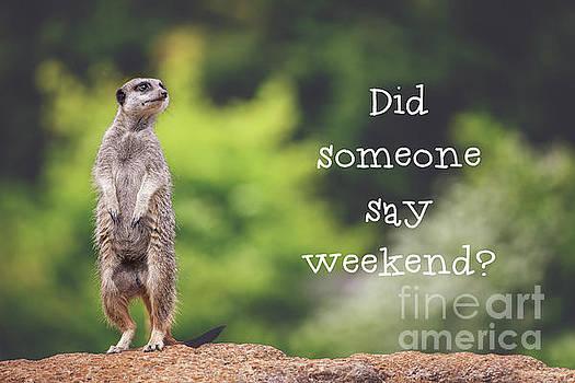 Meerkat asking if it's the weekend yet by Jane Rix