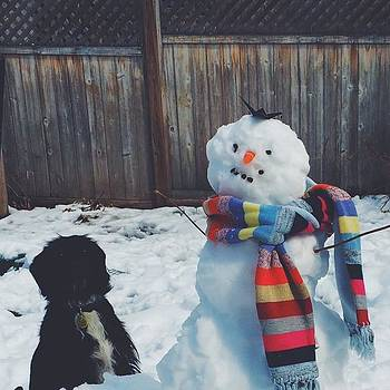 Meet Boris (and Remy) ⛄️ #dog by Anna Harland