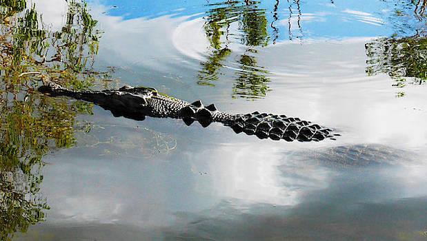 Lexa Harpell - Meet Saltie - The Saltwater Crocodile