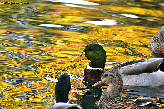 Meeting in The Golden Hour by Jeanne Thomas