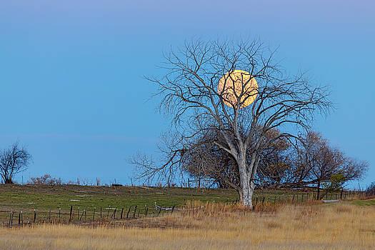 Mega Beaver Moon  by James BO Insogna