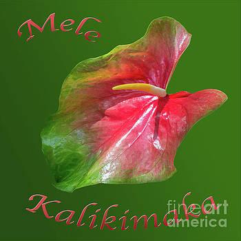 Mele Kalikimaka Lily by Cheryl Del Toro