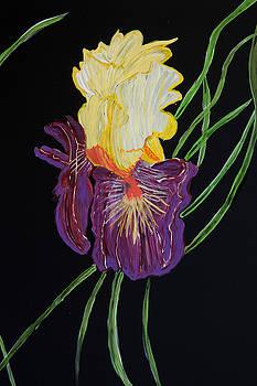 Mellow Iris by Judy Huck