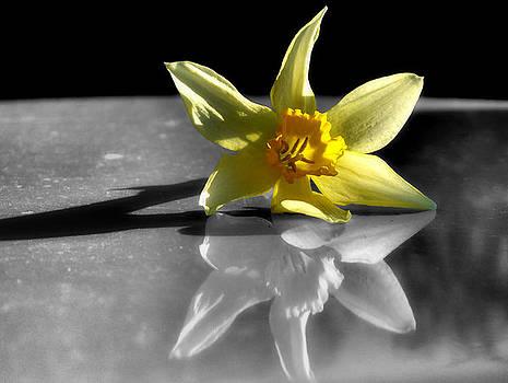 Karen M Scovill - Mellow Yellow
