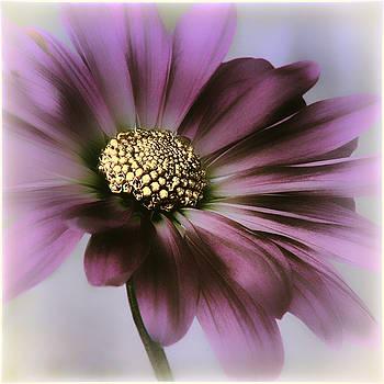 Memories of Spring by Darlene Kwiatkowski
