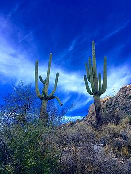 Memories of the Desert by Heidi Moss