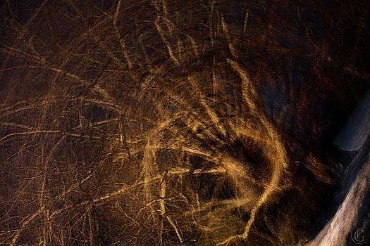 Menacing Tree by Patrick Groleau