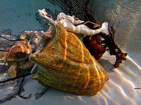 Mermaid on a shell by Barbara Kelley