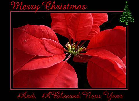 Merry Christmas 2015 by Judy Johnson