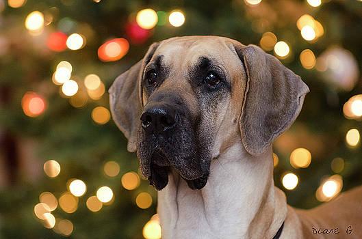 Merry Christmas by Diane Giurco