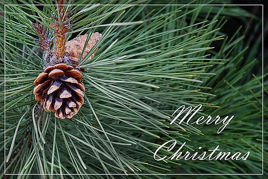 Nikolyn McDonald - Merry Christmas - Pine Cones