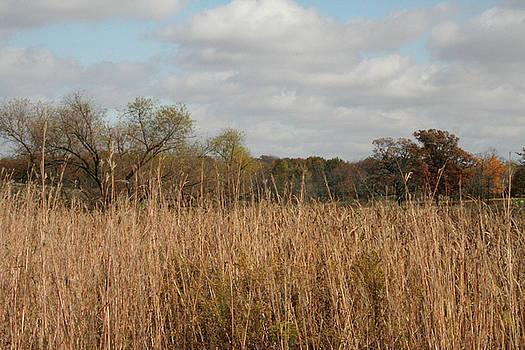 Merwin Prairie Autumn I by Dylan Punke