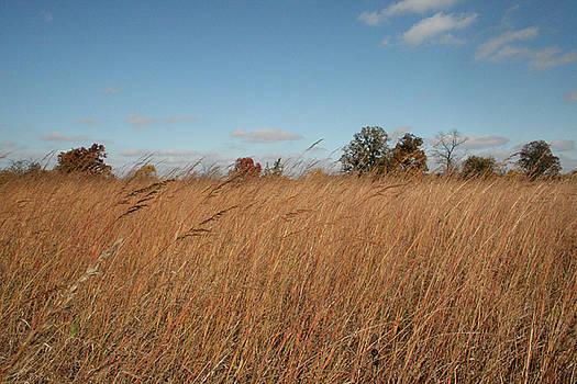Merwin Prairie Autumn II by Dylan Punke