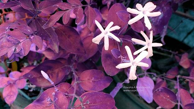 Rizwana A Mundewadi - Mesmerizing Blooms