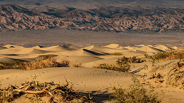 Mesquite Dunes by Bill Gallagher