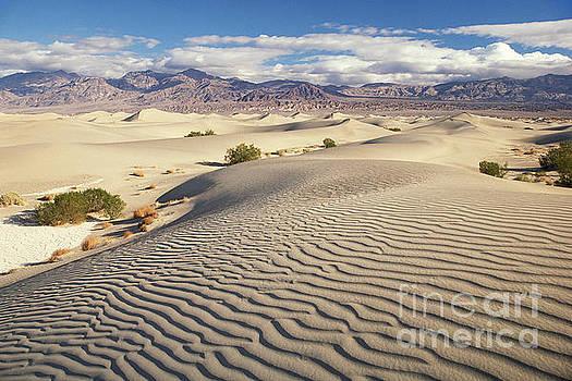 Mesquite dunes by Tim Hauf