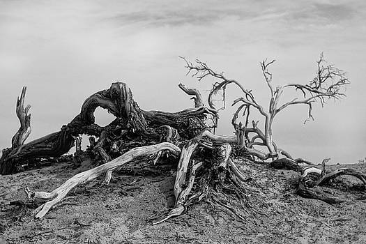 Mesquite Roots - Death Valley 2015 by Roland Peachie