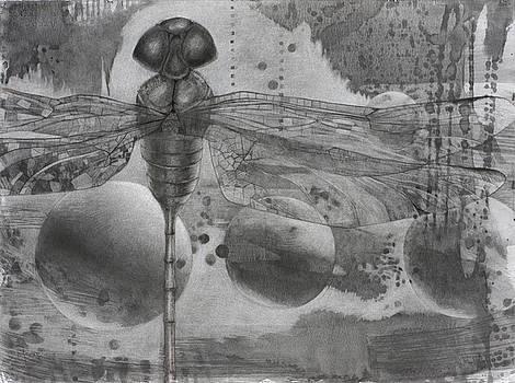 Shimmer by Debbie Moore
