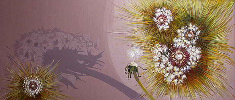 Metamorphosis by Ioana Harjoghe Ciubucciu
