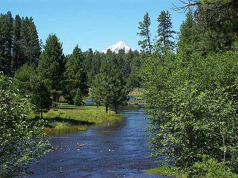 Metolius River - Oregon by Julie Bell