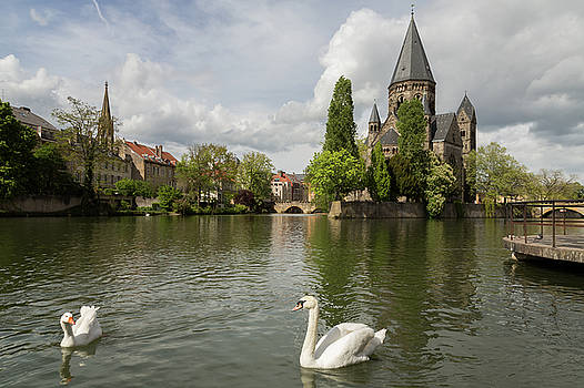 Metz Swan and Goose by John Daly