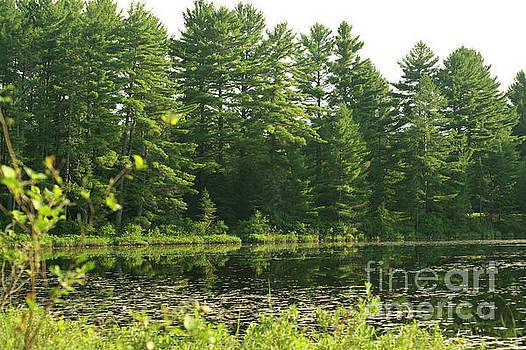 Elaine Mikkelstrup - Mew Lake Algonquin Park