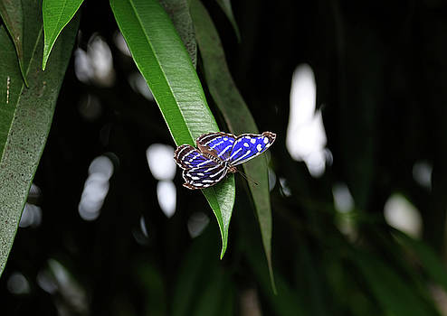 Mexican Blue by Ronda Ryan
