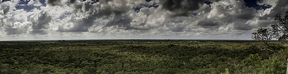 Mexican Jungle Panoramic by Jason Moynihan