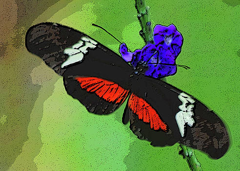 Mexican Longwing Butterfly by Winnie Chrzanowski