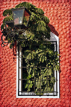Teresa Zieba - Mexican Window Lamp and Green Leaves