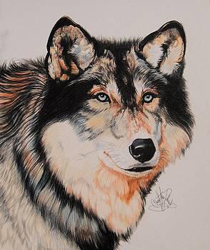 Mexican Wolf Hybrid by Cheryl Poland