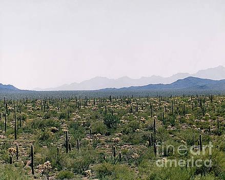 Mexico Desert by John  Fix