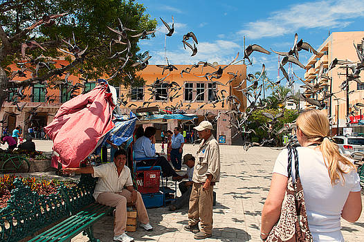 Mexico Pigeon  Attack by Colin Sands