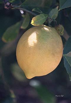 Meyer Lemon Goodness by Suzanne Gaff