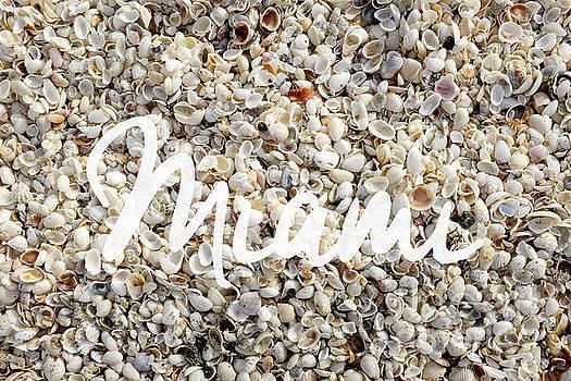 Edward Fielding - Miami Seashells