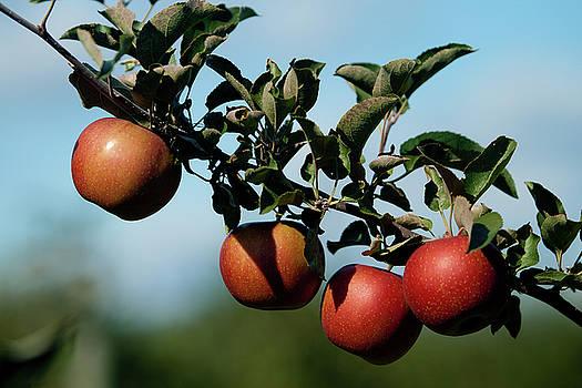 Rich Sirko - Michigan Apples