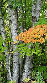 Michigan Autumn by Debra Kaye McKrill