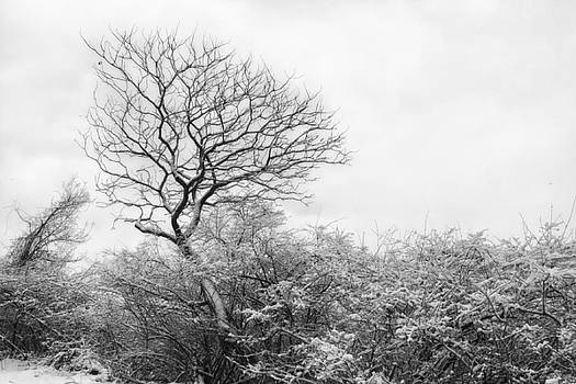 Michigan Winter by Lisa Chorny