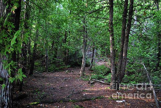 Gary Wonning - Michigan woods