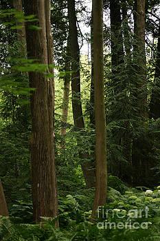 Michigan Woods by Linda Shafer
