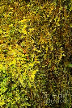 Adam Jewell - Micro Ferns In The Forest