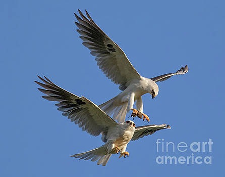 Mid Air Food Exchange by Beth Sargent