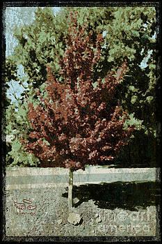 Mid Century Tree by Beauty For God