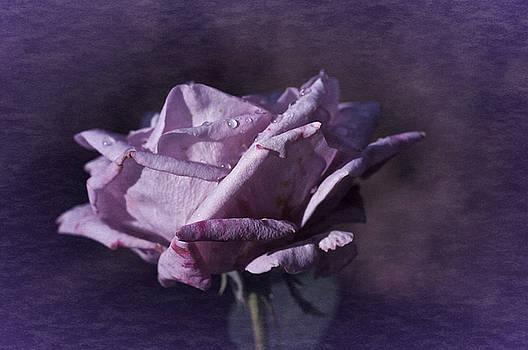 Mid September Purple Rose by Richard Cummings