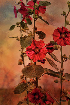 Mid-Summer Hollyhocks by Theresa Campbell