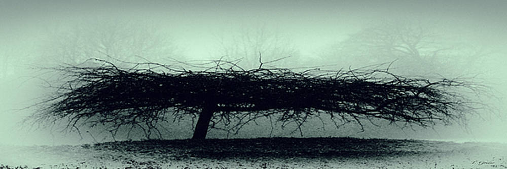 TONY GRIDER - MIDDLETHORPE TREE IN FOG GRAY AND GREEN PANORAMA