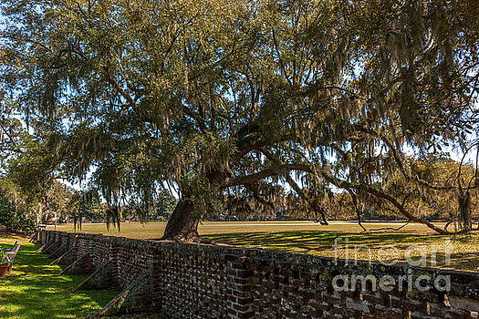 Middleton Place Plantation Grounds by Dale Powell