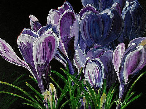 Midnight Crocus by Vickie Warner