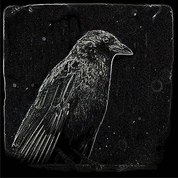 Midnight Crow by Gothicrow Images