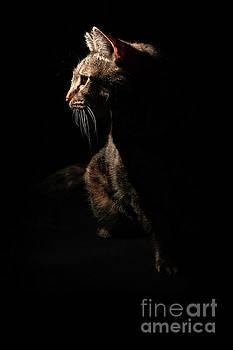 Midnight Huntress by Nancy Forehand